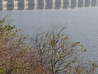 Rana Pratap Dam Sagar