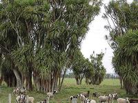 Rangitaiki Área de Conservación