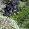 Rare & Useful Flora In Oulanka Canyon - Oulanka National Park Finland