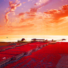 Red Beach, Liaoning