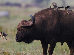 Camping Safaris 4 Days / 3 Nights - Masai Mara & Lake Nakuru Photos