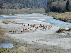 Redwood Creek (Condado de Humboldt)