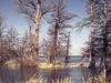 Reelfoot Lake State Park