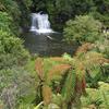 Rerekapa Mountain Bike Track - North Island - New Zealand