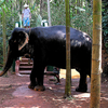 Private Eco-Tour: Crocodile Watching, Spice Plantation & Elephant Experience In Goa