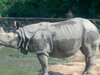 Rhino At Assam State Zoo