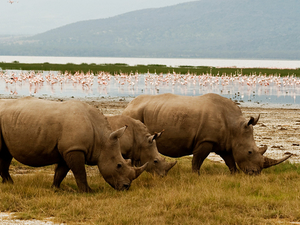 Lake Nakuru National Park Photos