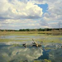 Rice Lake State Fish & Wildlife Area