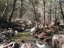 Rich Tonto National Forest Eco-System