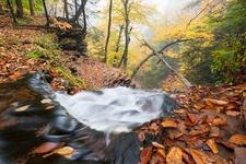 Ricketts Glen State Park Waterfall Trail - Pennsylvania