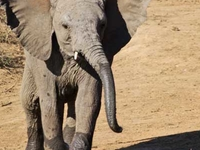 Safari 3 Countries, 3 National Parks & The Indian Ocean