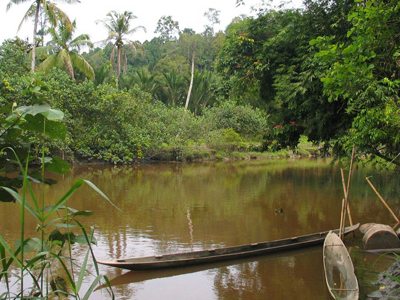 River At Siberut Island