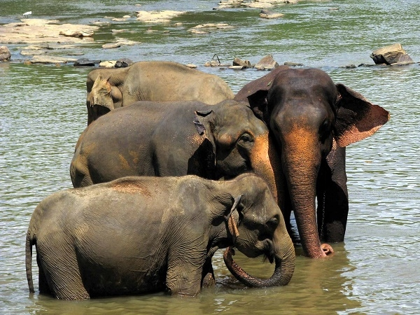Visit To See Elephants In Sri Lanka Photos