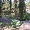 River In Ometepe