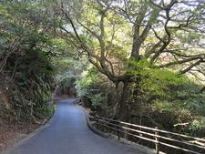 Roadway - Miyajima Natural Botanical Garden