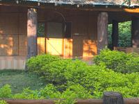 Royal Jungle Retreat