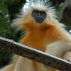 Royal Manas National Park