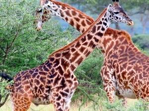 5 -Day Selous And Mikumi Safari Fotos