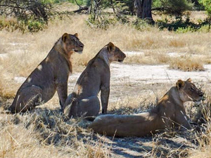 Tanzania Southern Circuit Safari - Ruaha National Park Photos