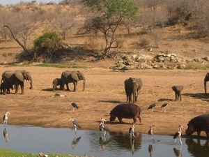 3 Days Safari in Ruaha National Park Fotos