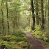 Ruapani Circuit Track - Te Urewera National Park - New Zealand