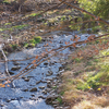Ruatoki Road End To Apiti Hut Trail - Te Urewera National Park - New Zealand