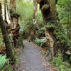 Ruatoki Road End To Wharekahika Hut Track - Te Urewera National Park - New Zealand