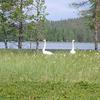 Ruka Flora & Fauna Landscape - Finland