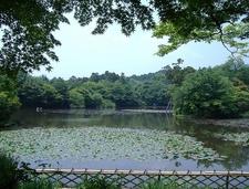 Ryoanji Garden Area