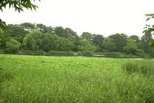 A Large Pond In Ryokuchi Koen