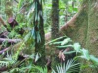 Wet Tropics de Queensland