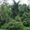 Cottan-strike con el puño Parque Nacional