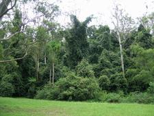Rainforest In Cottan Bimbang National Park