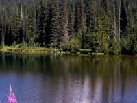 Clearwater Wilderness