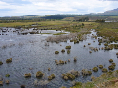 Part Of Rakatu Wetlands