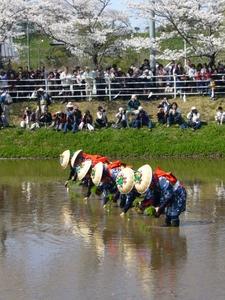 Rice-Transplanting Festival