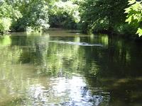 Río Crane