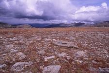 Trail Ridge Road Tundra