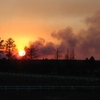 Rodeo-Chediski Fire, Bison Ranch