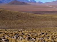 Puna Grassland