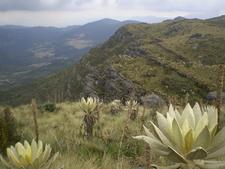 Páramo De Guerrero In Cundinamarca