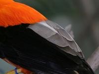 Yanachaga Chemillén National Park