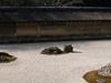 Ryōan-ji Dry Garden
