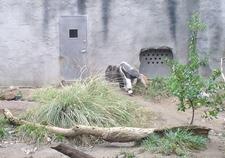 Sacramento Zoo Anteater