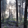 Saddle Ridge Trail 14 - Tonto National Forest - Arizona - USA