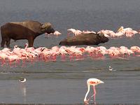 Samburu National Reserve Camping Safari