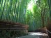 Sagano Bamboo Forest - Arashiyama