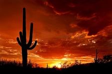 Saguaro National Park At Sunset
