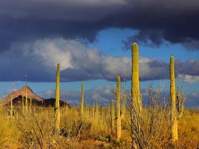 Saguaro NP Tucson AZ