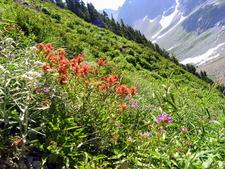 Sahale Arm Trail